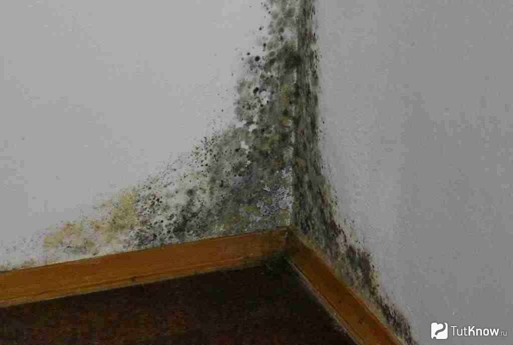 Грибок на стенах в доме0