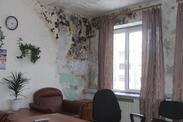 Грибок на стенах в доме4