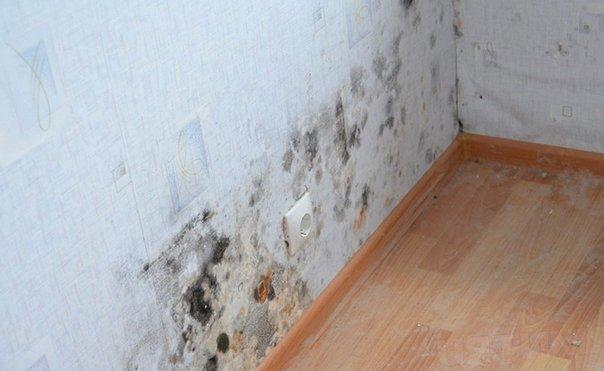 Грибок на стенах в доме5