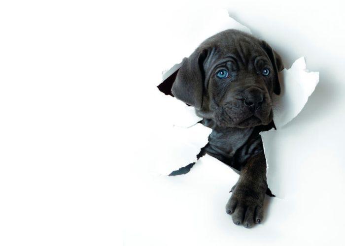Как отучить собаку грызть и рвать обои6