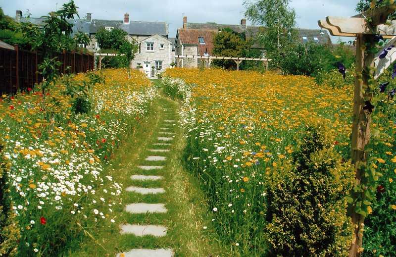 Как сделать газон: виды, подготовка, посадка, уход3