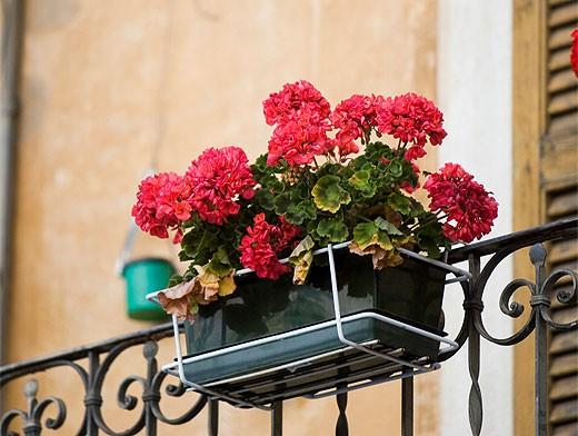 Какие растения и когда можно высаживать на балконе?1