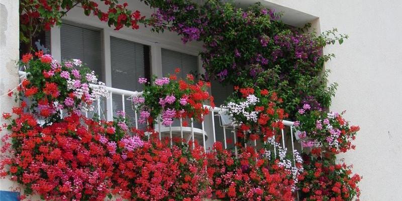 Какие растения и когда можно высаживать на балконе?2