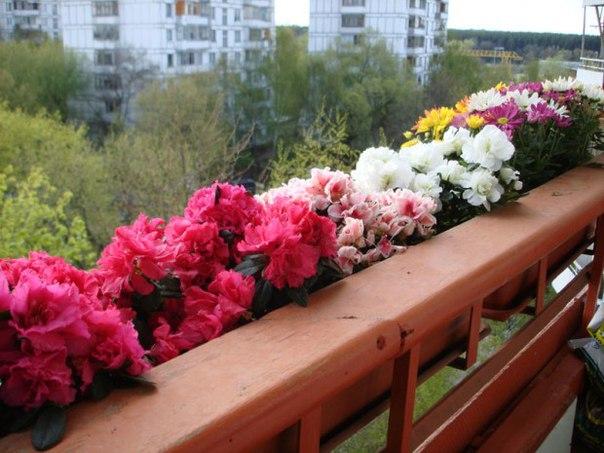 Какие растения и когда можно высаживать на балконе?3