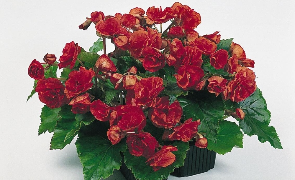 Какие растения и когда можно высаживать на балконе?4