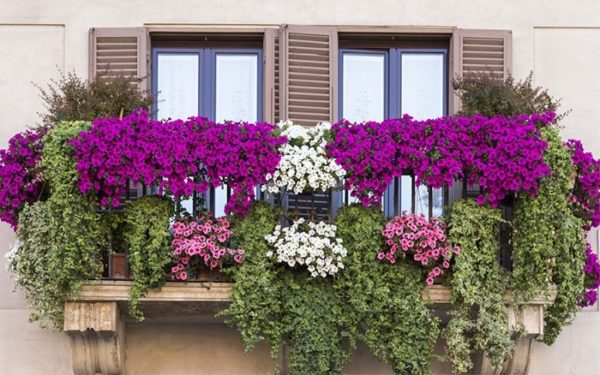 Какие растения и когда можно высаживать на балконе?6