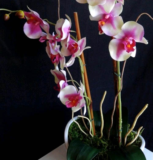 Красивые орхидеи в горшке круглый год0