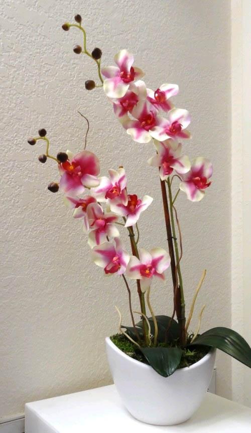 Красивые орхидеи в горшке круглый год1