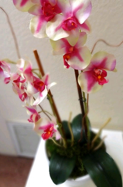 Красивые орхидеи в горшке круглый год3