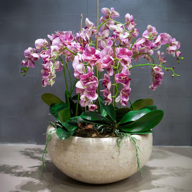 Красивые орхидеи в горшке круглый год4