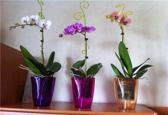 Красивые орхидеи в горшке круглый год5