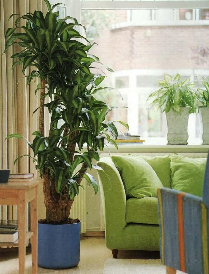 Крупные растения в интерьере0