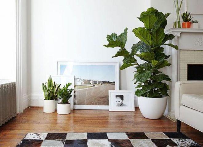 Крупные растения в интерьере5