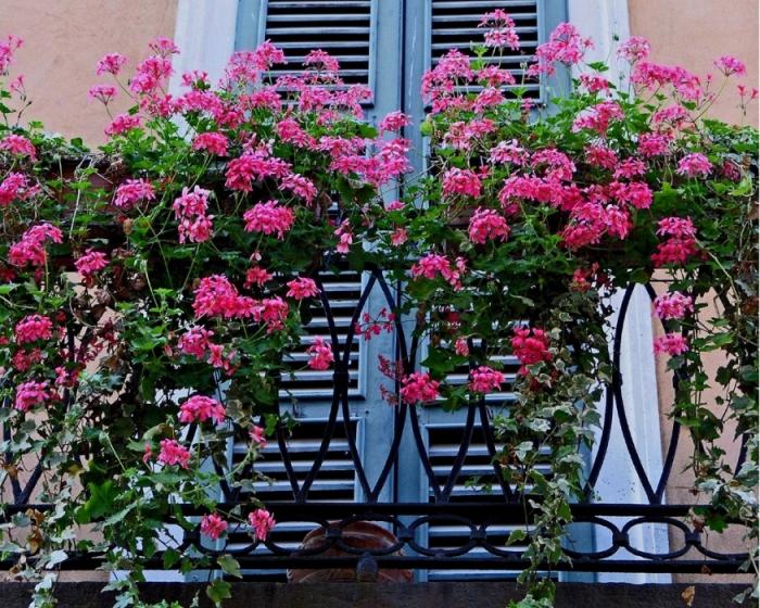 Летний мини-сад — цветущие балконы и террасы4