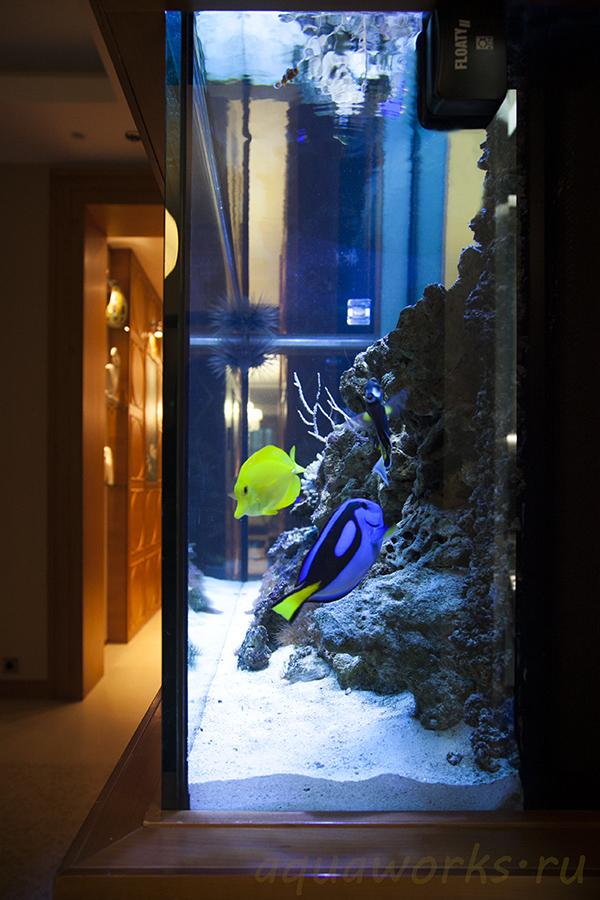 Морской аквариум в квартире0