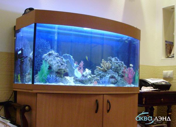 Морской аквариум в квартире2