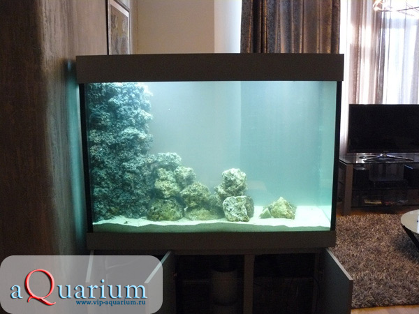 Морской аквариум в квартире3