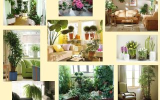 Комнатные растения в интерьере квартиры: правила оформления