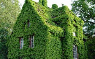 «живой» дом