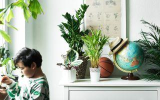 Выбираем безопасные комнатные растения для детской комнаты