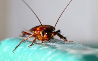 Эффективные методы борьбы с насекомыми в ванной комнате